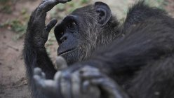Animals at primate sanctuary freeze to death after San Antonio-area wildlife sanctuary lost power early Monday