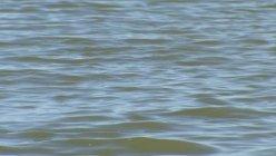 17-year-old drowned while swimming in Joe Pool Lake