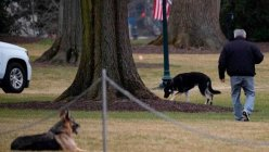 Biden's older German Shepherd, Champ dies at the White House
