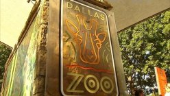 The city of Dallas offers free admission for local attractions to teens and family members this summer season
