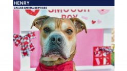 Dallas rescue dogs get a second chance and fly to Canada to find homes