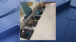 More than 100dogs rescued from Mesquite home