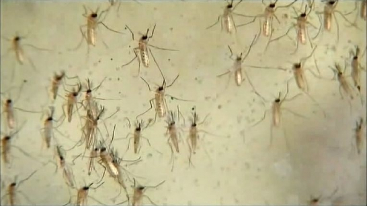 Three new human cases of the West Nile Virus in the Dallas County
