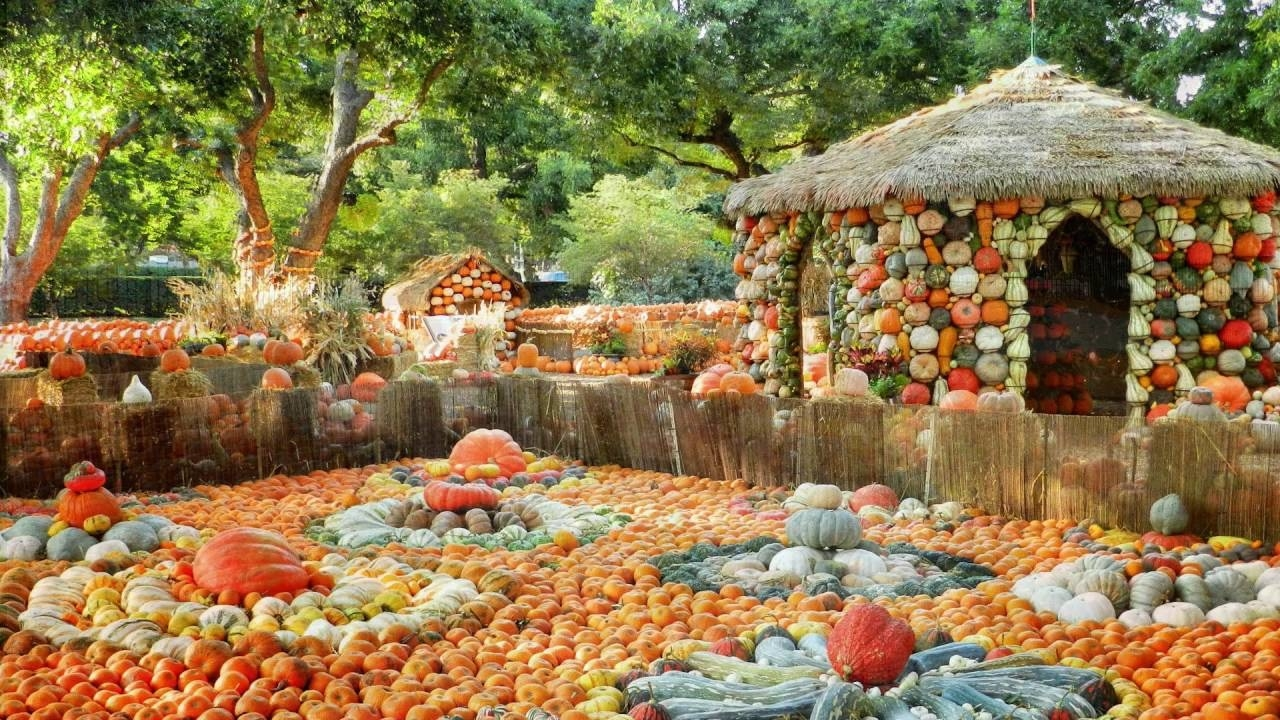 Dallas Arboretum all set to celebrate 'Autumn at the Arboretum' from this weekend