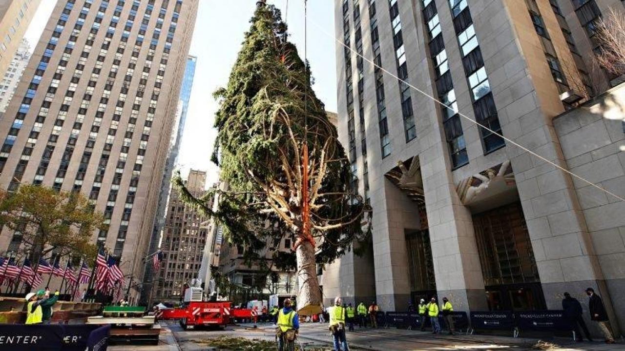 New York's Rockefeller Center 2020 Christmas tree goes up