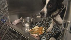 Fort Worth animal shelter pets weren't left out of Thanksgiving festivities