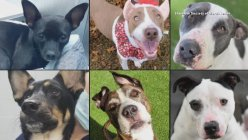 More than 500 animals up for adoption this weekend in Fort Worth